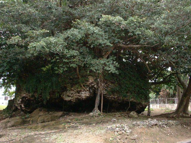 石垣島に津波で打ち上げられた大岩1