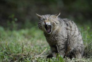 猫から感染