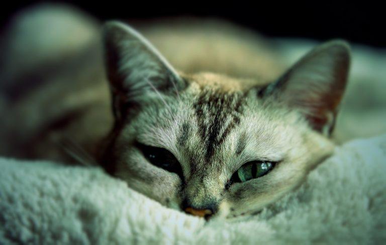 人にもうつる猫インフルエンザが流行する??