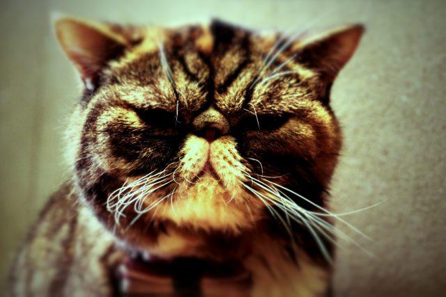 猫インフルエンザは感染したら厄介