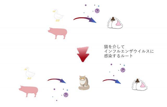 猫インフルエンザの感染ルートイメージ
