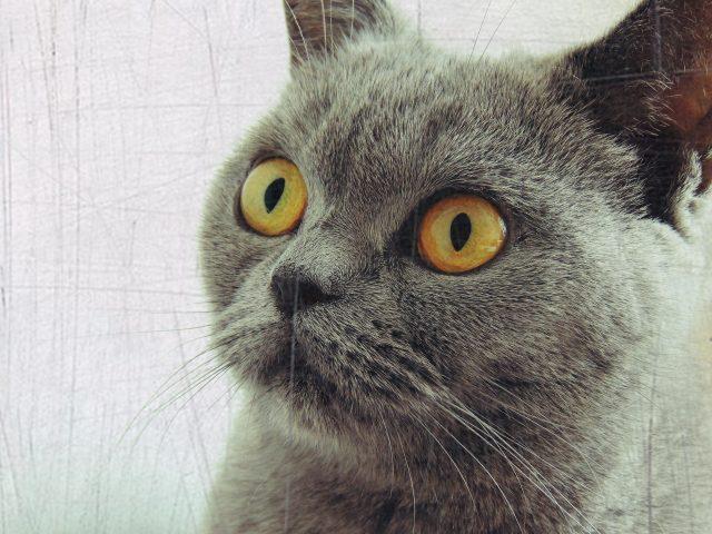 猫インフルエンザに感染したら
