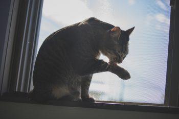 猫の習性上感染しやすい?