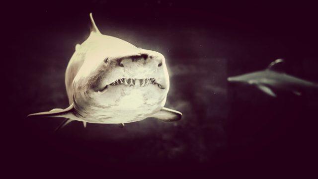 日本のサメたち