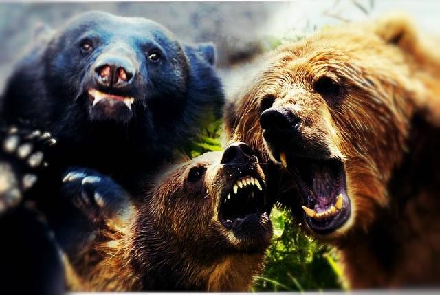 恐怖のクマとの遭遇