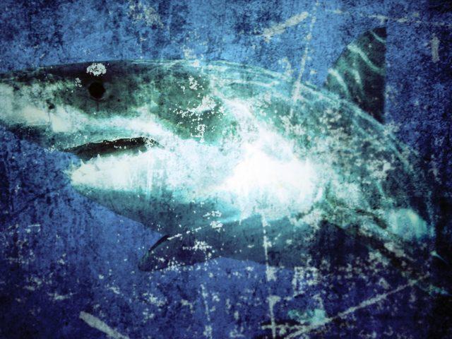 日本のサメ被害