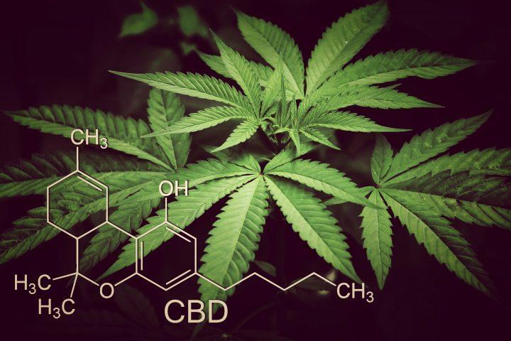 大麻の危険性に注意を向ける