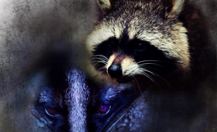 アライグマとハクビシンの対策